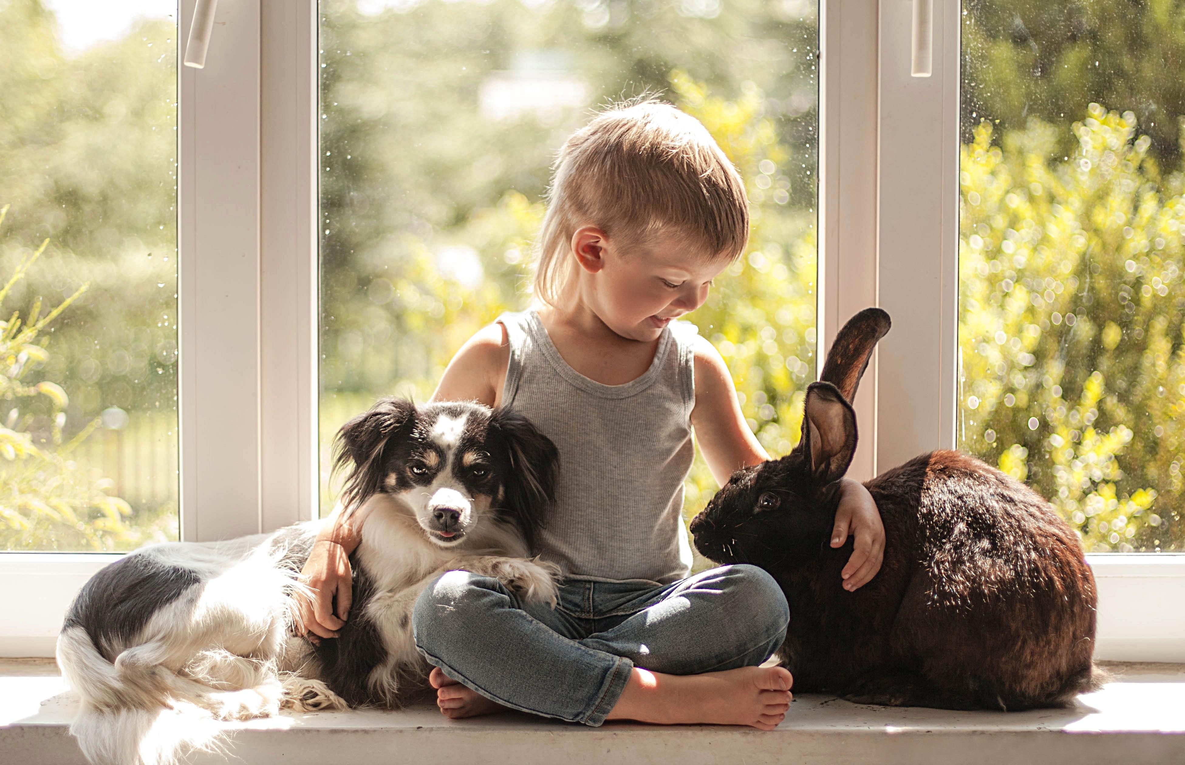 Чему необходимо научить ребёнка перед покупкой зверушки