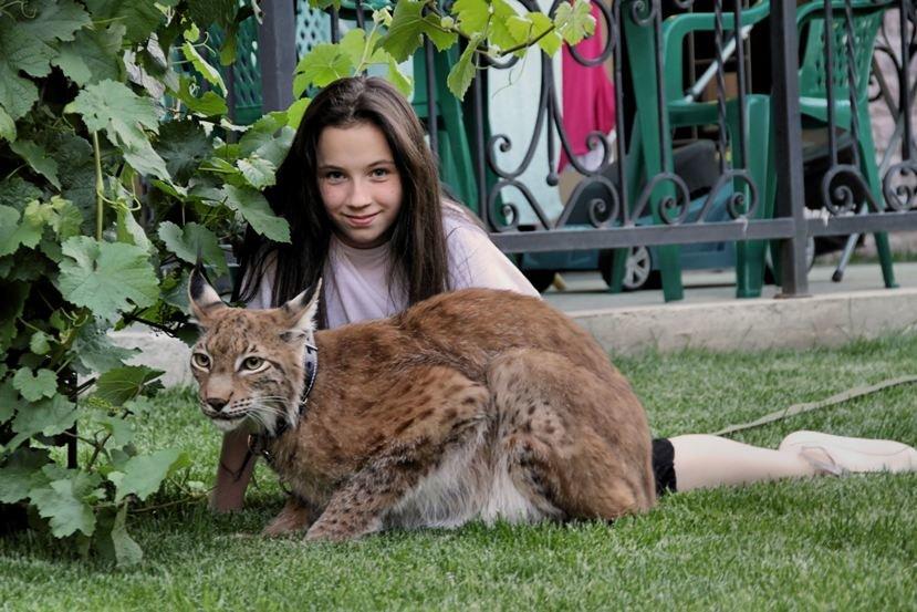 Чему необходимо научить ребёнка перед покупкой зверушки 4