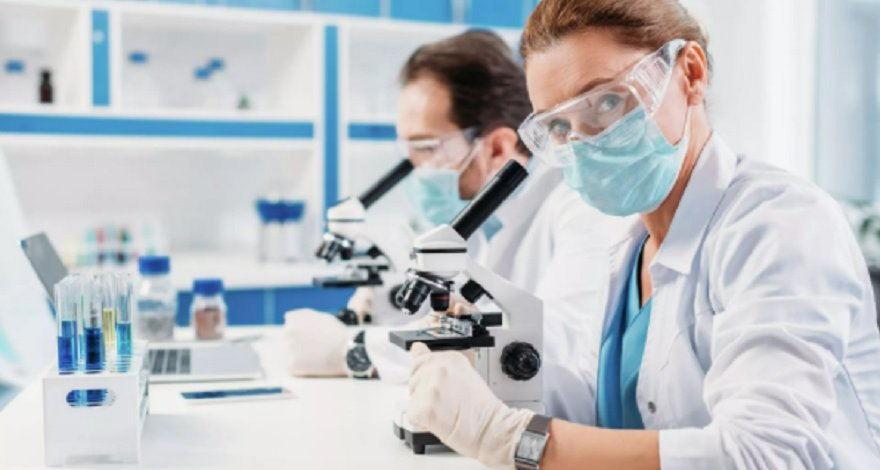Учёные создали из клеток кожи модель человеческого эмриона