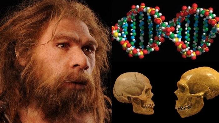 Исследование ДНК неандертальцев дало неожиданные результаты