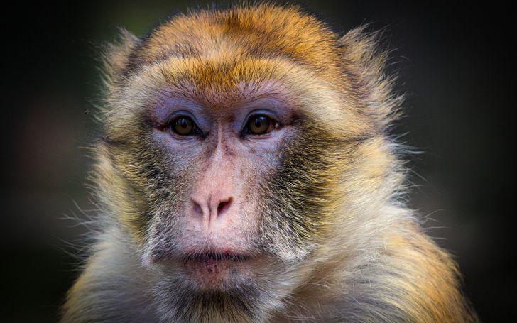 Химера обезьяны с человеком: учёным удалось создать гибридный эмбрион