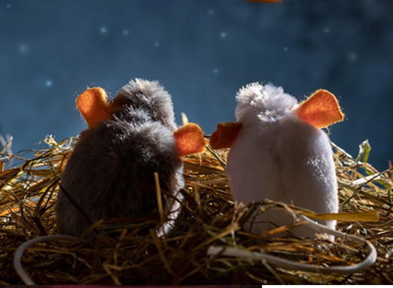 Роскосмос снова обещает покорить Луну, теперь с помощью мышей