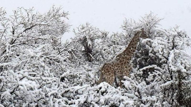 Глобальное потепление не для Африки, там выпал снег