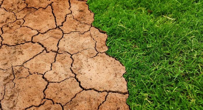 Учёные спрогнозировали заболевания, которые принесёт глобальное потепление